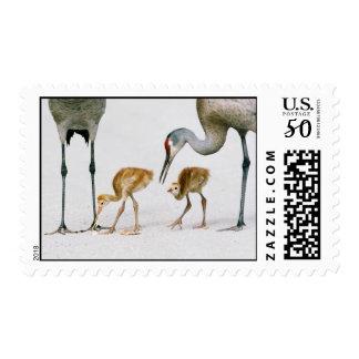 Sandhill Crane Famiy postage stamp