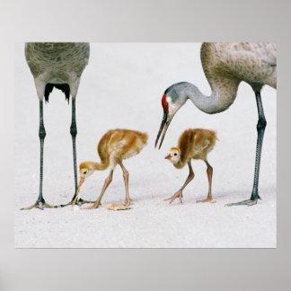Sandhill Crane Famiy print