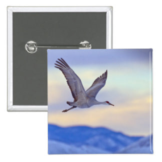 Sandhill crane flying at sunset 2 inch square button