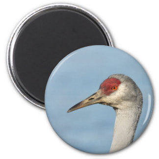 Sandhill Crane Fridge Magnets