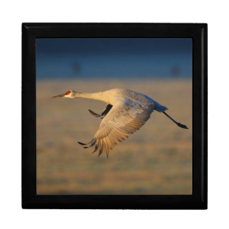 sandhill crane jewelry box