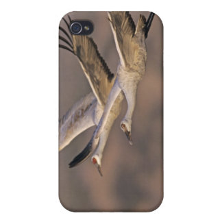 Sandhill Crane, Grus canadensis, adult and Covers For iPhone 4
