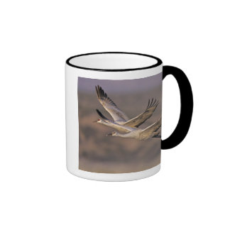 Sandhill Crane, Grus canadensis, adult and Coffee Mug