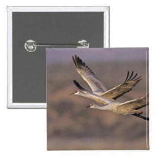 Sandhill Crane, Grus canadensis, adult and Pinback Button
