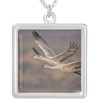 Sandhill Crane, Grus canadensis, adult and Square Pendant Necklace