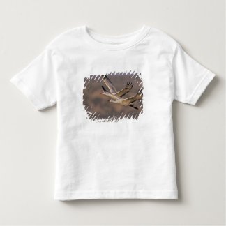 Sandhill Crane, Grus canadensis, adult and Toddler T-shirt