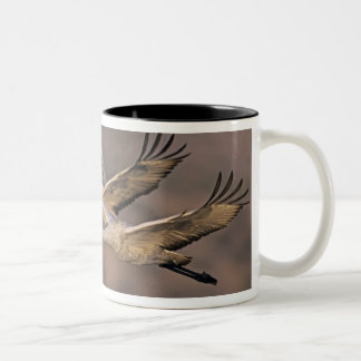 Sandhill Crane, Grus canadensis, adult and Two-Tone Coffee Mug