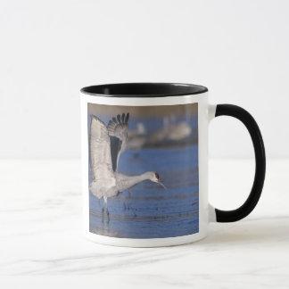 Sandhill Crane, Grus canadensis,adult Mug