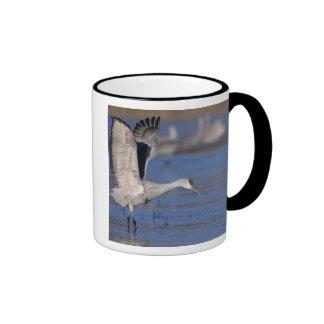 Sandhill Crane, Grus canadensis,adult Coffee Mug