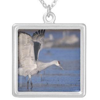 Sandhill Crane, Grus canadensis,adult Square Pendant Necklace