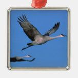 Sandhill Crane Grus canadensis) in flight. Christmas Tree Ornaments