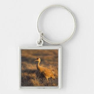 sandhill crane, Grus canadensis, in the 1002 2 Silver-Colored Square Keychain