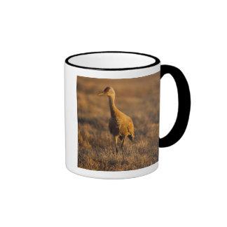 sandhill crane, Grus canadensis, in the 1002 Coffee Mugs