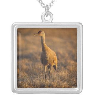 sandhill crane, Grus canadensis, in the 1002 Square Pendant Necklace