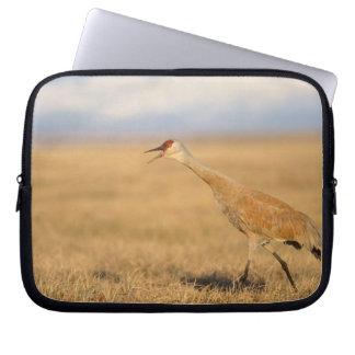 sandhill crane, Grus canadensis, walking in the Laptop Sleeve