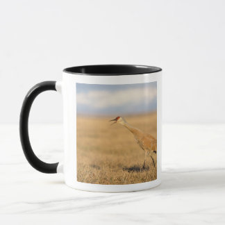 sandhill crane, Grus canadensis, walking in the Mug