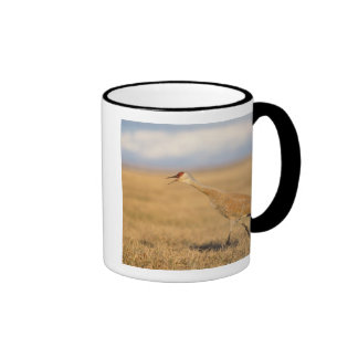 sandhill crane, Grus canadensis, walking in the Coffee Mug