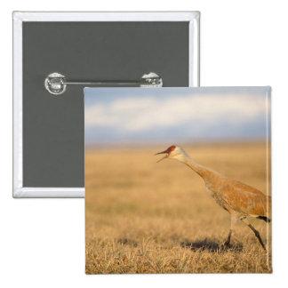 sandhill crane, Grus canadensis, walking in the Pinback Button