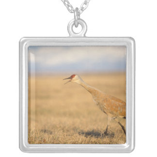 sandhill crane, Grus canadensis, walking in the Square Pendant Necklace