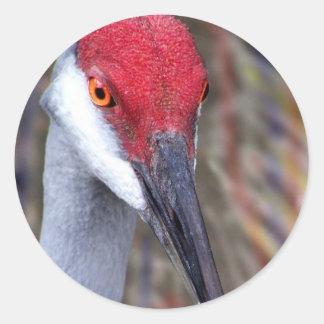 Sandhill Crane Head PIcture with colours around Classic Round Sticker