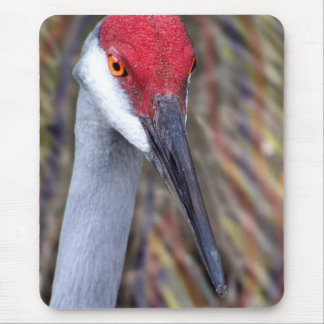 Sandhill Crane Head PIcture with colours around Mouse Pad