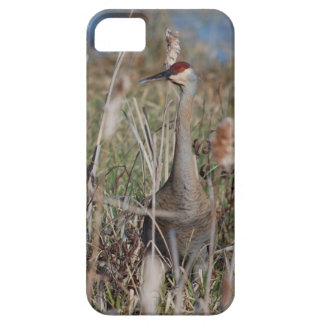Sandhill Crane iPhone 5s Case. iPhone SE/5/5s Case