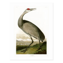 Sandhill Crane John James Audubon Birds of America Postcard