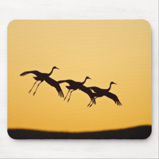 Sandhill Crane landing at sunset Mouse Pad