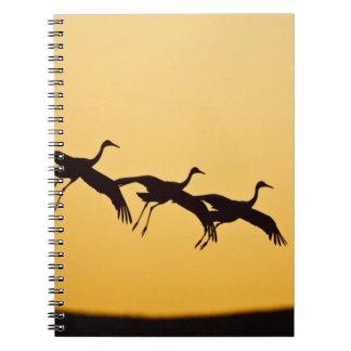Sandhill Crane landing at sunset Spiral Note Books