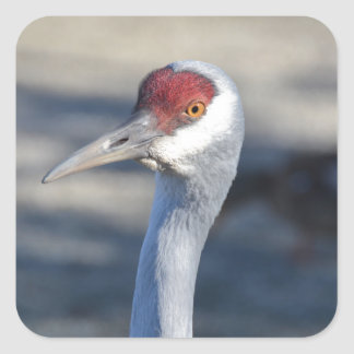 Sandhill Crane Square Sticker