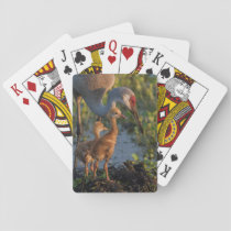 Sandhill crane with chicks, Florida Playing Cards