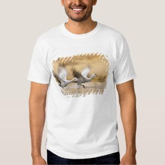 Sandhill Cranes a adultos del canadensis del Grus) Poleras