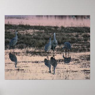 Sandhill cranes at dusk poster