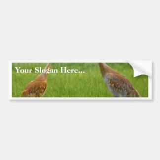 Sandhill Cranes Bumper Sticker