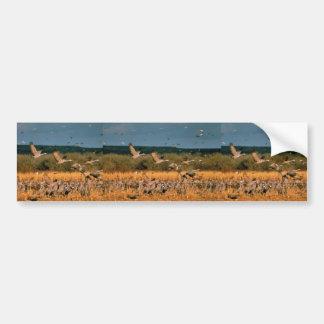 Sandhill Cranes Car Bumper Sticker
