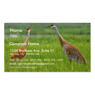 Sandhill Cranes Double-Sided Standard Business Cards (Pack Of 100)