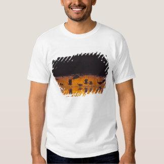 Sandhill Cranes el canadensis) del Grus Bosque Del Camisas