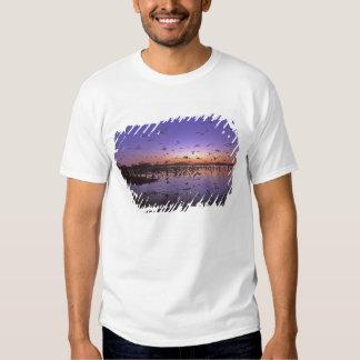 Sandhill Cranes el canadensis) del Grus Platte 2 Remeras