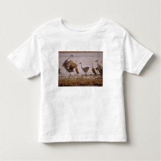 Sandhill Cranes el canadensis) del Grus Platte Camisas