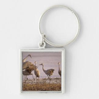 Sandhill Cranes el canadensis) del Grus Platte Llavero Cuadrado Plateado