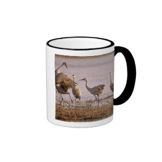 Sandhill Cranes el canadensis) del Grus Platte Taza De Dos Colores