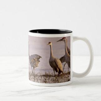 Sandhill Cranes el canadensis) del Grus Platte Taza De Dos Tonos