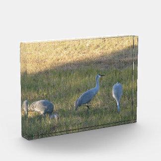 Sandhill Cranes (el grupo)