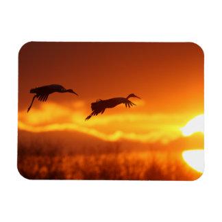 Sandhill Cranes Flying Rectangle Magnets