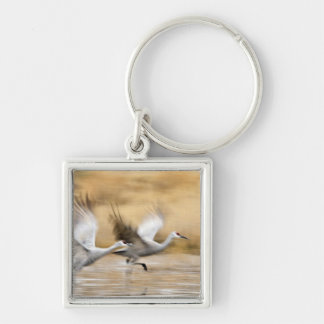 Sandhill Cranes Grus canadensis) adults in a Keychain