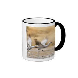 Sandhill Cranes Grus canadensis) adults in a Coffee Mugs