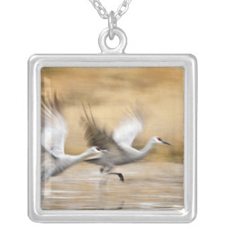 Sandhill Cranes Grus canadensis) adults in a Silver Plated Necklace