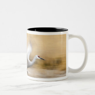Sandhill Cranes Grus canadensis) adults in a Two-Tone Coffee Mug