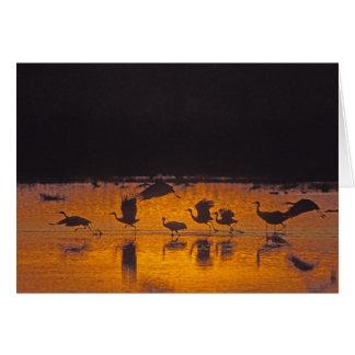 Sandhill Cranes Grus canadensis) Bosque Del 2 Greeting Cards