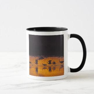 Sandhill Cranes Grus canadensis) Bosque Del 2 Mug
